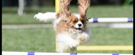 Dog Agility as practice